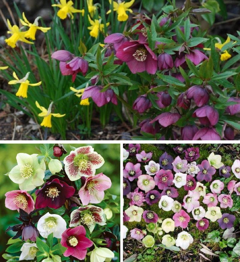 Цветы флоксы 72