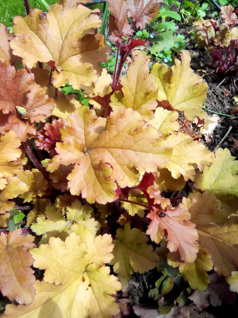 растения тенистого сада фото