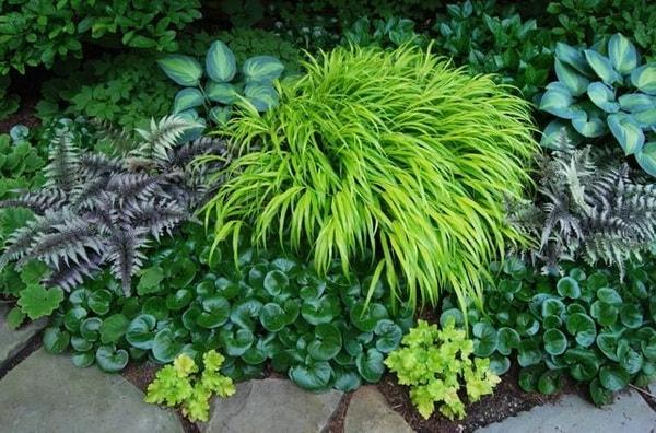 10 домашних цветов мужегонов : как выглядят, почему так называются