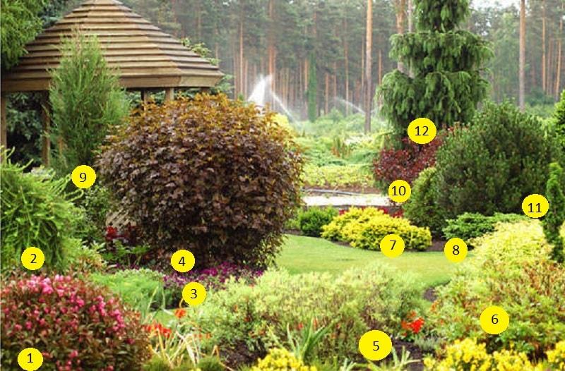 Пузыреплодник описание посадка уход в дизайне сада