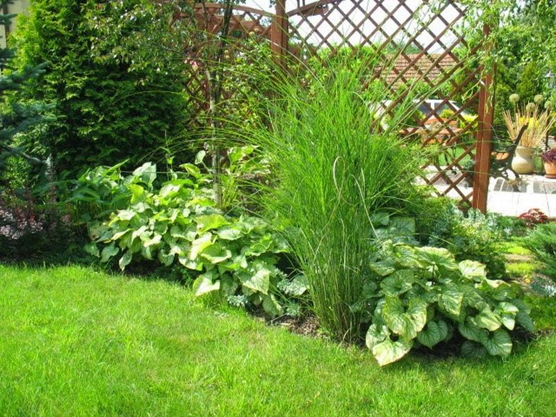 домашние цветы с зелено белыми листами фото