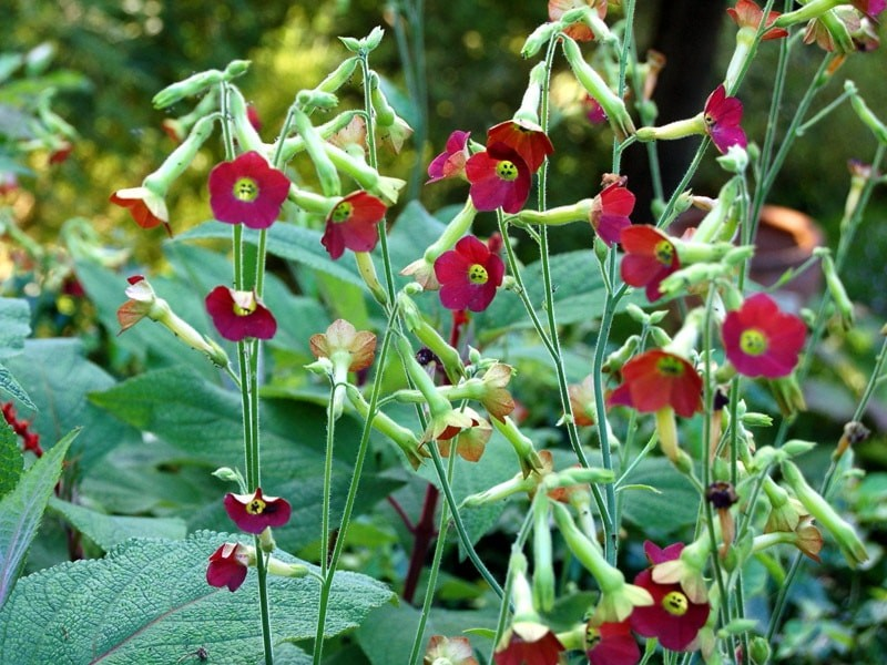 Грунт для высадки лилий