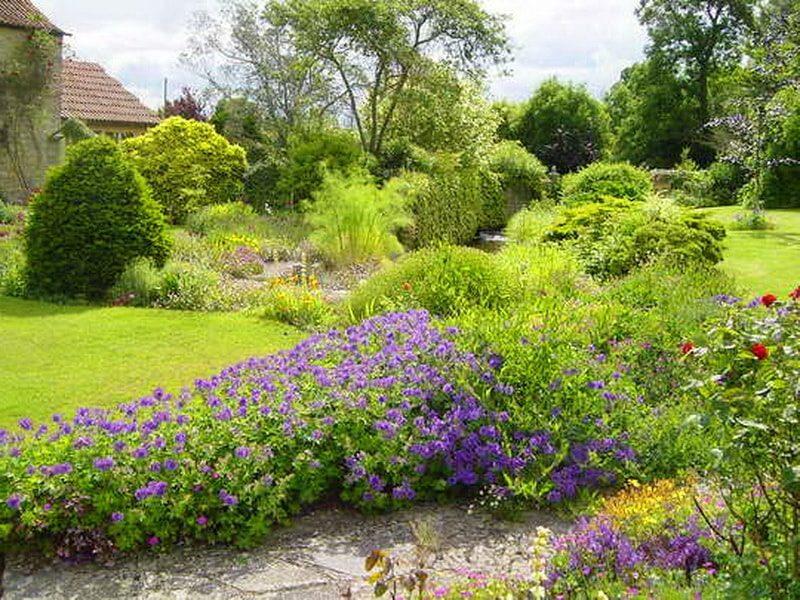 герань садовая многолетняя в ландшафтном дизайне