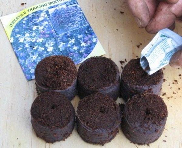 Употребление кокосовых таблеток для рассады