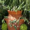 Пересадка травянистых многолетников из контейнеров в сад