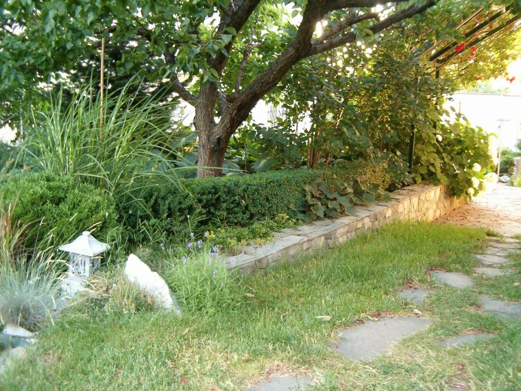 бордюр из самшита (фото 2014)