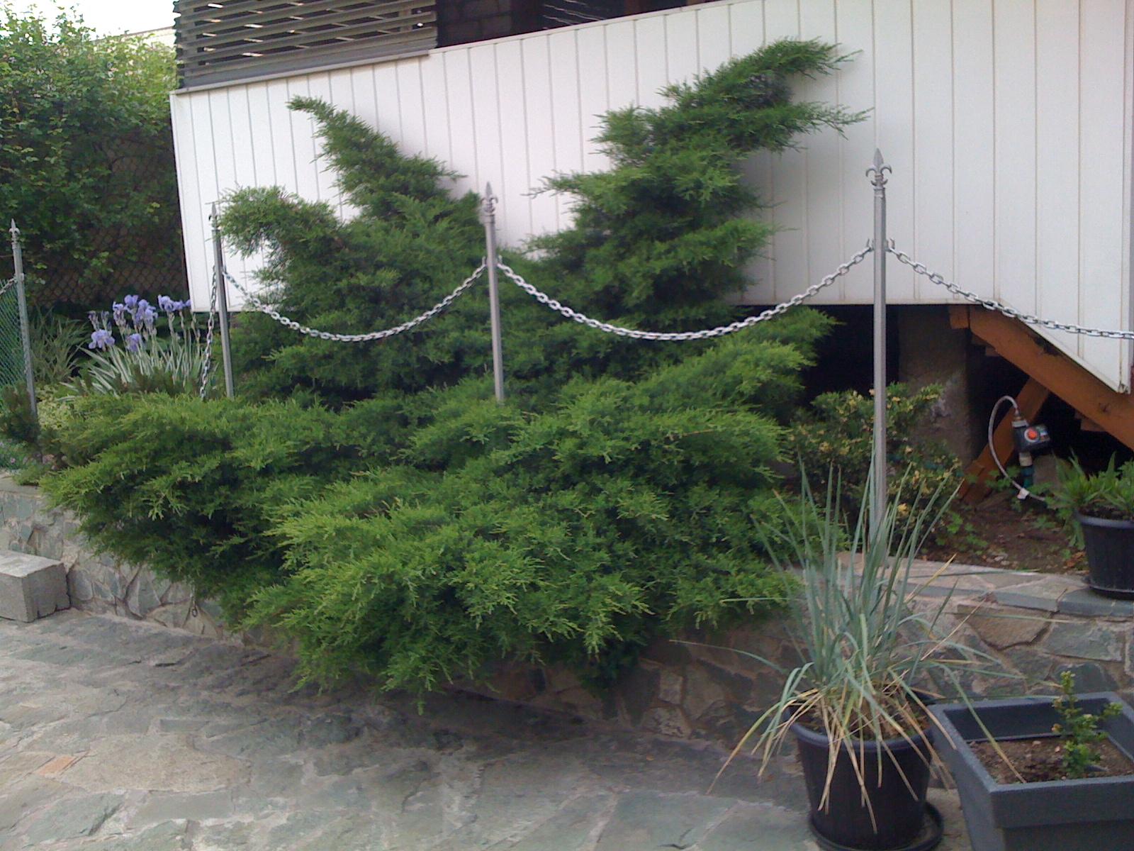 Садовые бонсаи своими руками фото 874