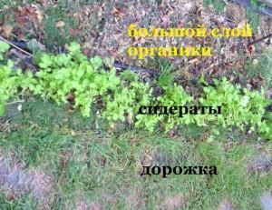 огурцы без химии в открытом грунте - заправка грядки для огурцов органикой