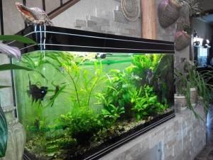 аквариумная вода как удобрение для рассады