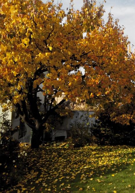 Что делать с листвой в саду осенью
