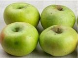 интенсивный сад яблоня сорта Ренет Симиренко