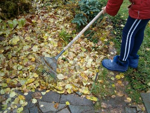 целесообразно ли сгребать в кучи осенние листья