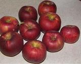 интенсивные сорта яблонь