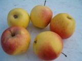 сорта яблони для интенсивного сада