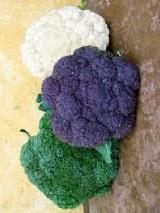 брокколи среди всех видов капустных растений - самая востребованная