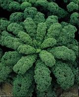 капуста kale набирает популярность среди других видов салатной зелени