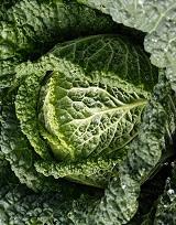 савойская - популярный вид капусты для свежих салатов