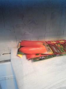 подготовка семян помидор к посеву в домашних условиях - прогрев семян на радиаторе
