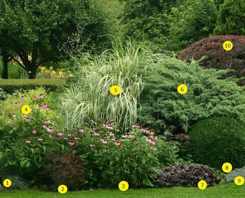декоративные злаки и травы в садовом дизайне