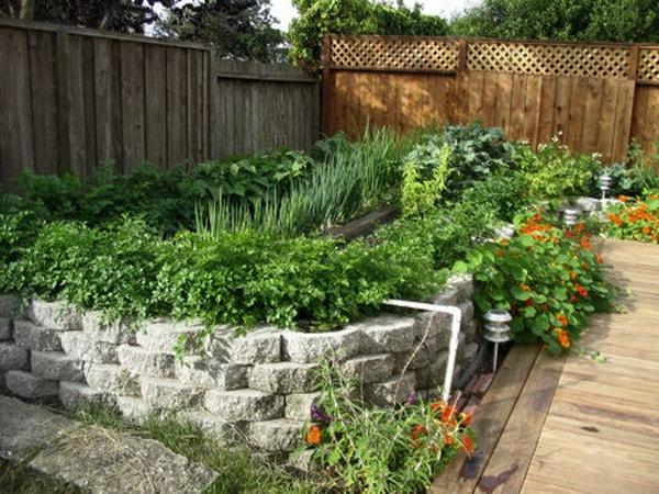 капуцины польза для огорода
