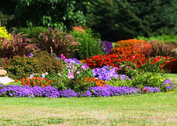 цветы агератум посадка и уход фото