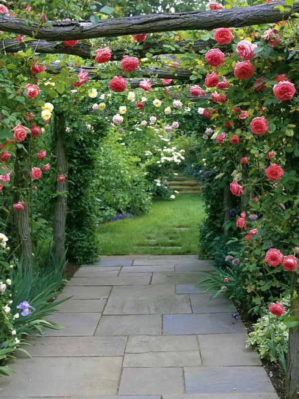 роза клайминг