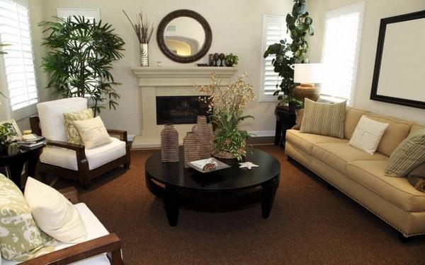 растения для экологии квартиры