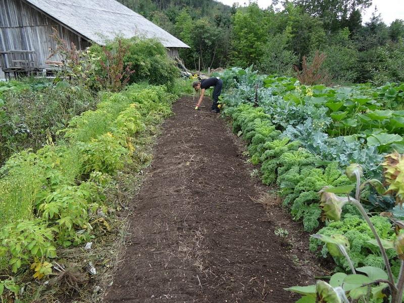 успешный садовод