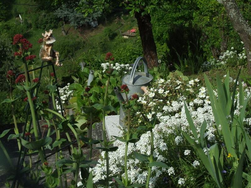 сад в стиле кантри деревенский уют фото