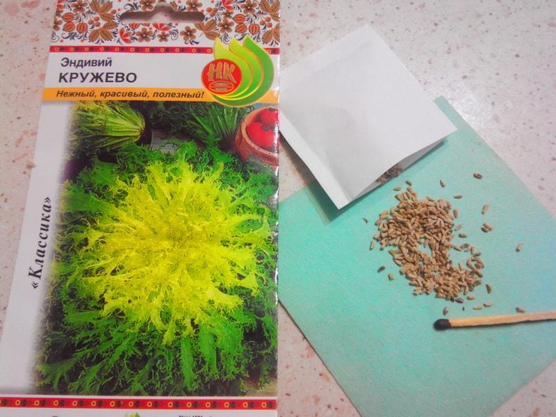 цикорный салат эндивий выращивание из семян