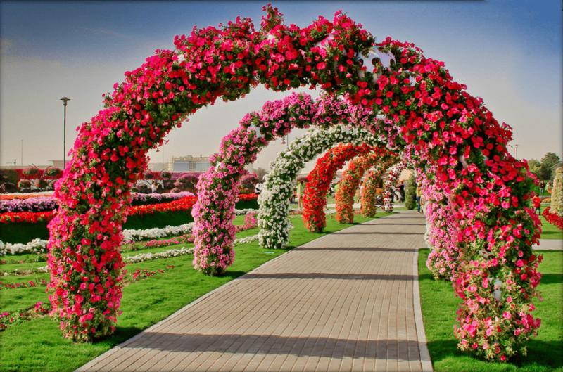 арки из петуний для вертикального озеленения