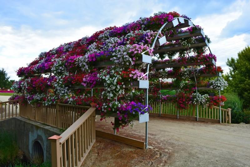 петунии для вертикального озеленения