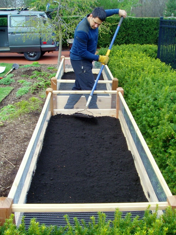 Какую почву любит свекла подготовка грядки весной как почва подходит