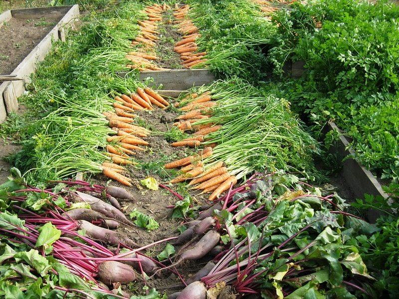 органические грядки в природном земледелии