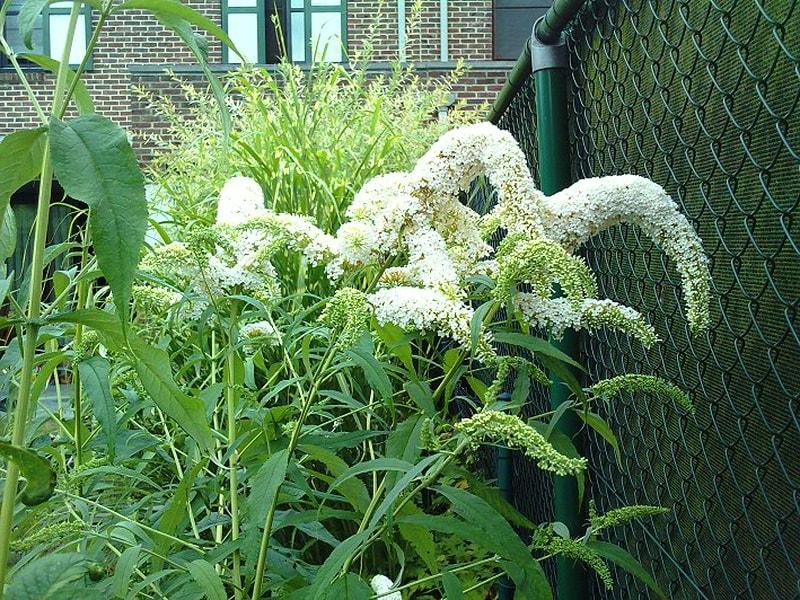декоративные злаки и солнцелюбивые растения