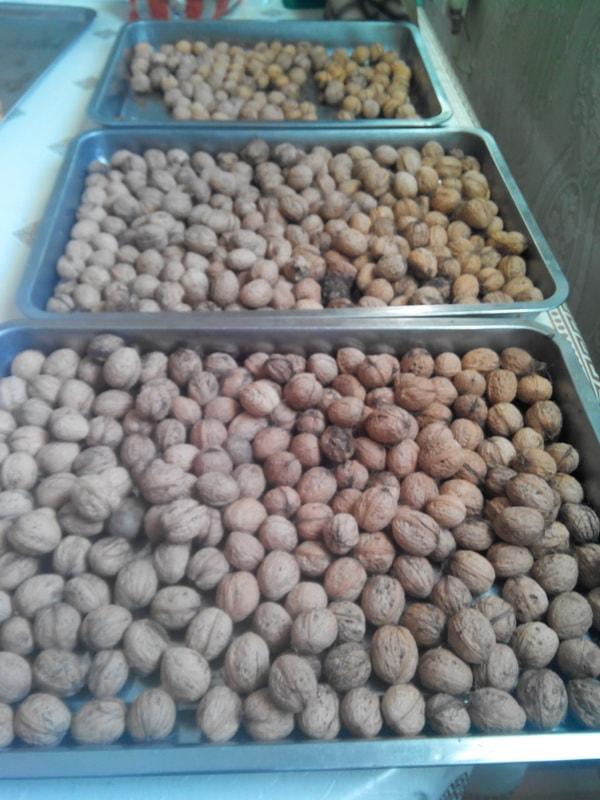 Когда созревают поспевают грецкие орехи что делать после сбора