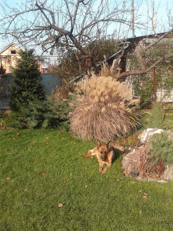 Подготовка к зиме плодовых деревьев и кустарников