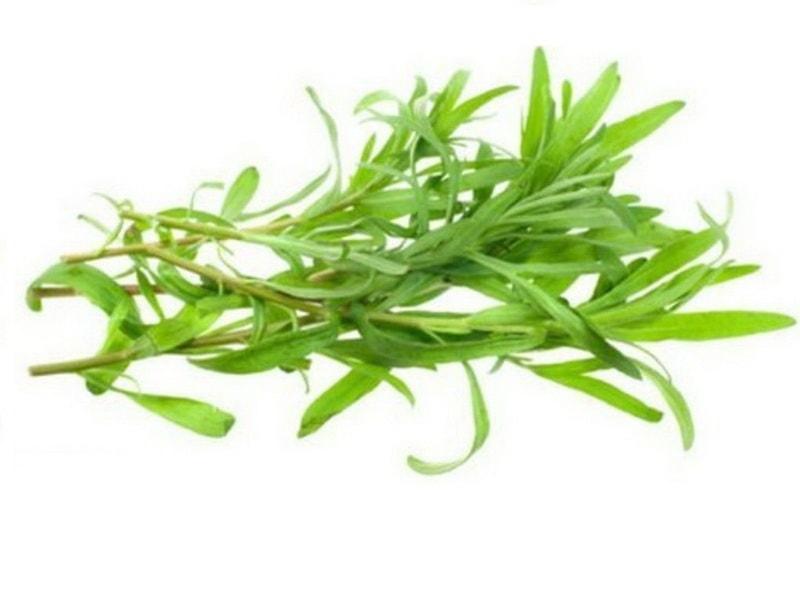 какая пряная трава называется эстрагон - тархун