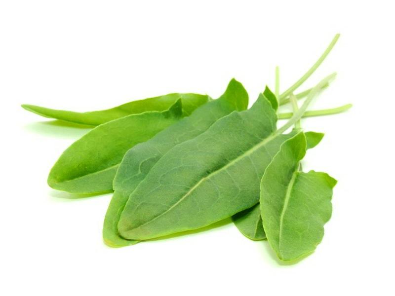 зеленый щавель для выращивания на даче