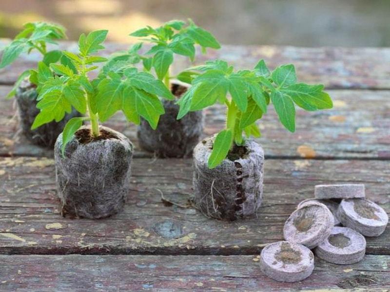 таблетки кокосовые с пророщенной рассадой