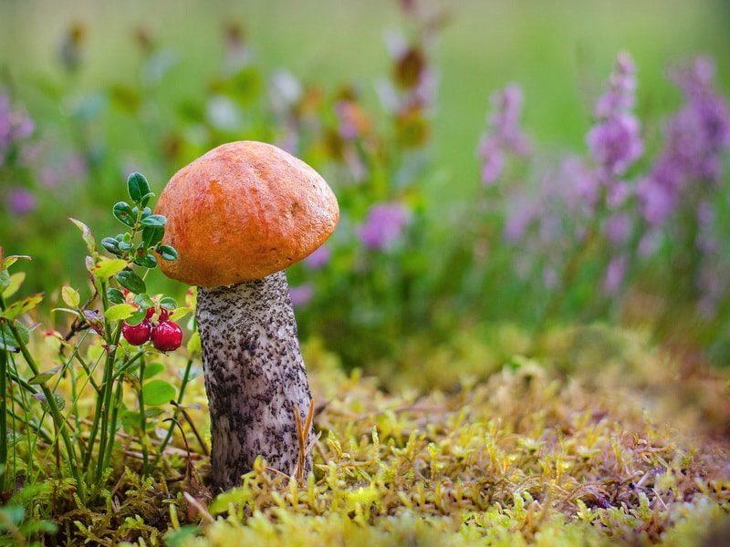 грибы: выращивание на даче в саду и огороде