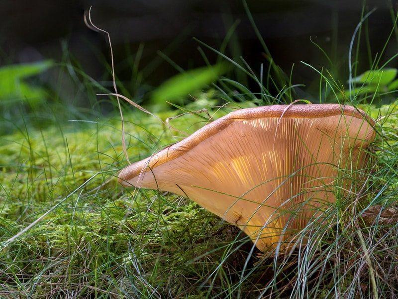 посадка грибов на даче улучшает экологию сада