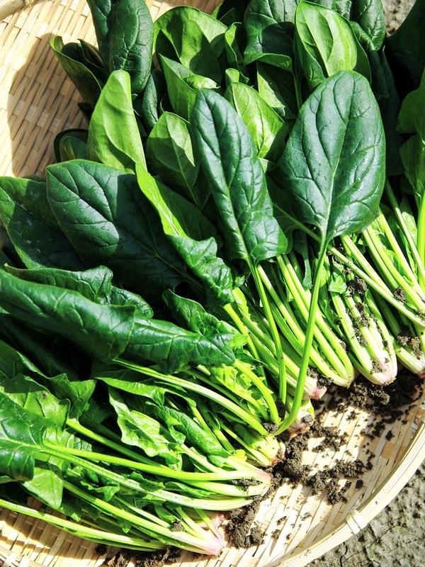 Как вырастить шпинат в огороде: когда и как сажать?
