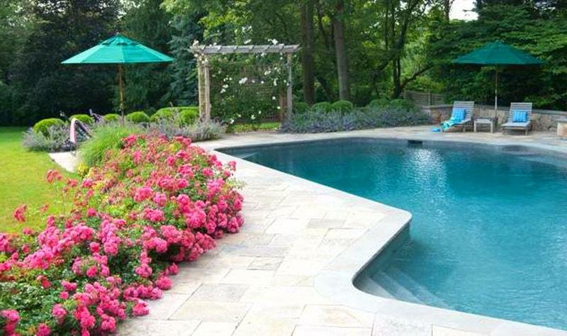 почвопокровные розы в дизайне сада
