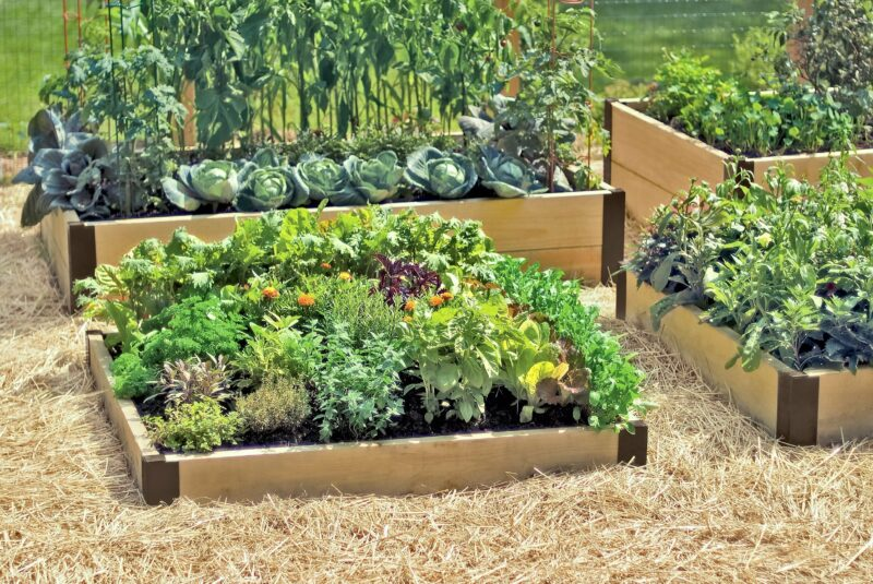 комфортный огород на даче