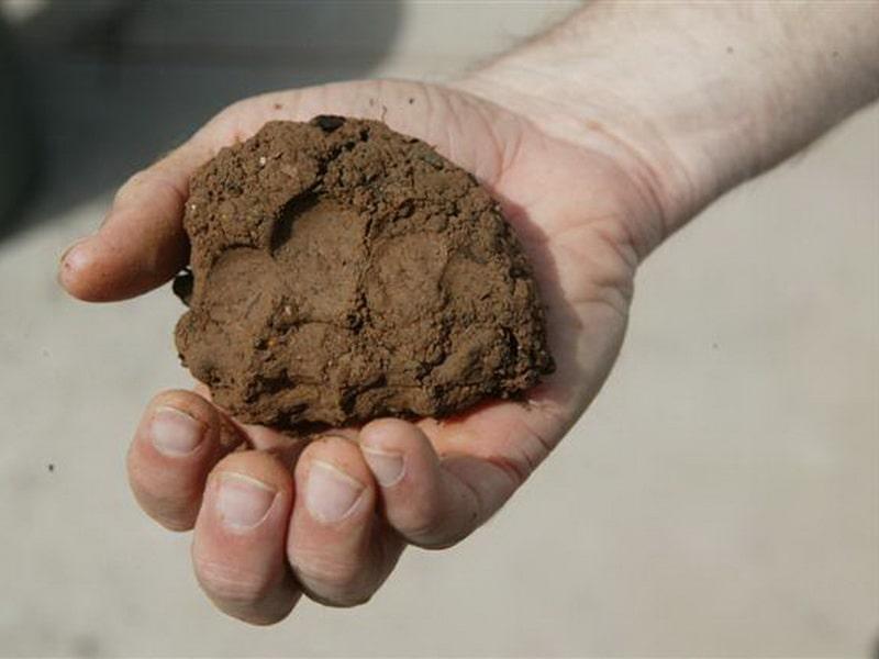 как определить состав почвы без лаборатории