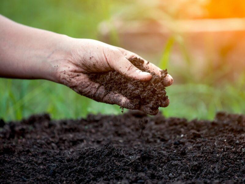 улучшение плодородия почвы