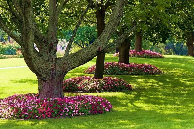 цветы в приствольном круге