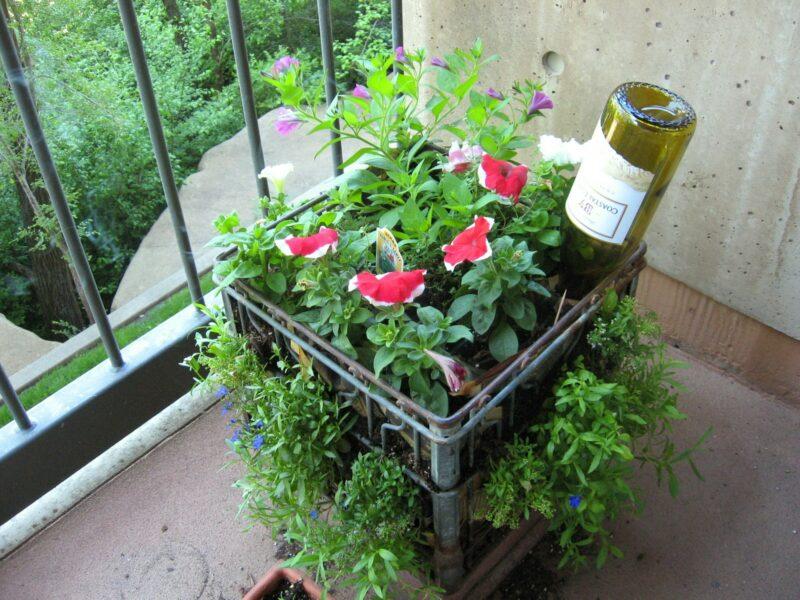 цветы в овощных контейнерах